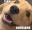 Team Rawr Rawr Logo