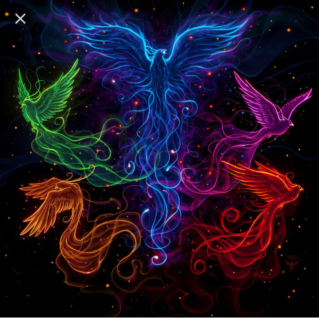 YSG Phoenix Logo